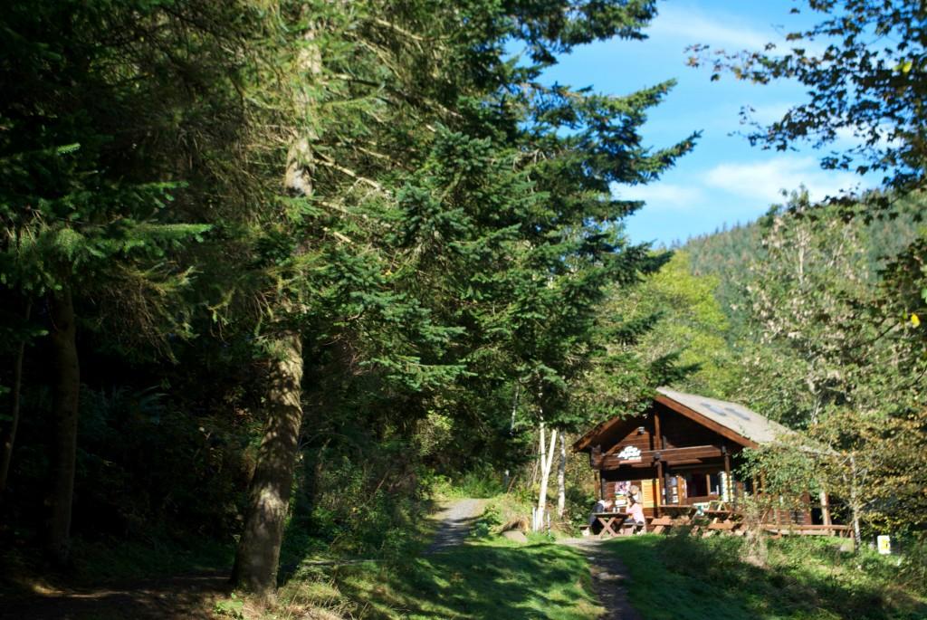 GoApe Glentres Forest